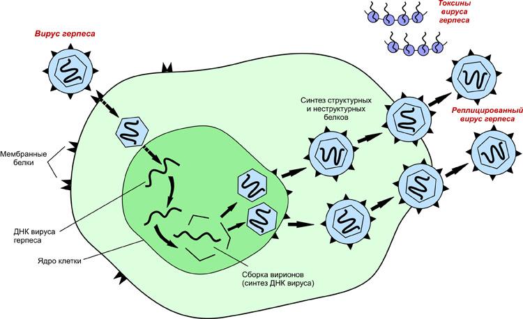 проникновение вируса1